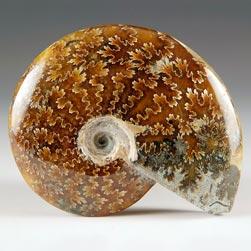 geschliffener Ammonit aus Madagaskar